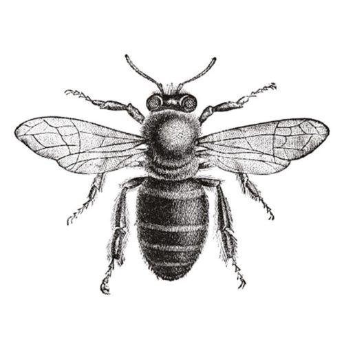 Wandering Bee | Midsummer & Midwinter Fair | Exhibitor at Wealden Times Fair.